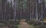Drzewo, drzewo powiedz przecie, jaką mam energię w świecie? Tworzenie takiego rysunku dużo Ci powie!