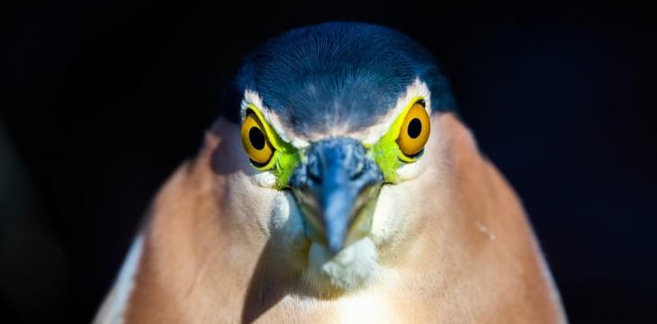 Jak oczy wpływają na głębię praktyki duchowej?