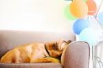 Wykręcony sposób na sen. Zioła i nie tylko.